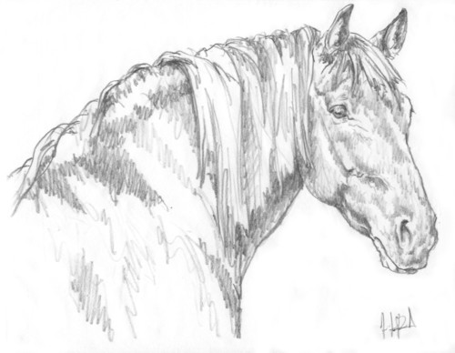 Diamond - Preliminary sketch of 'Canadian' gelding