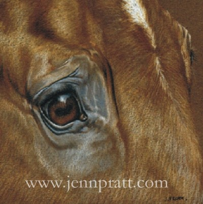 Chestnut Eye - 6x6 coloured pencil