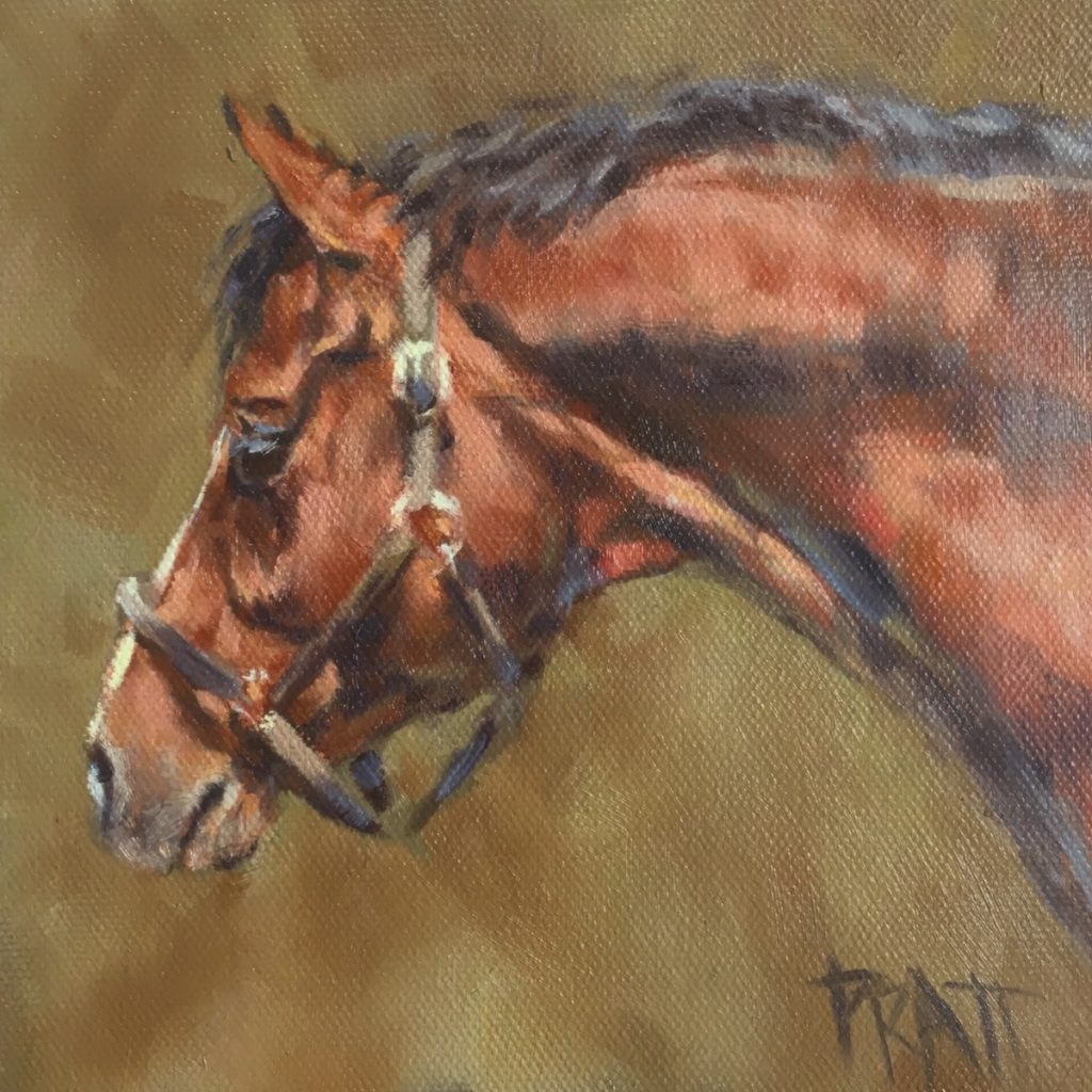 Sporthorse, Equine Artwork, Jennifer Pratt