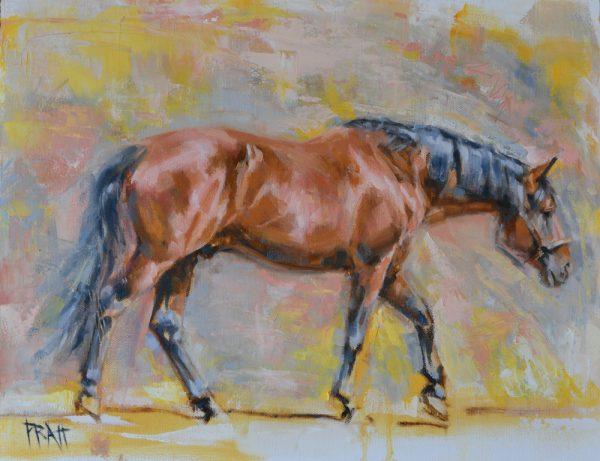 Irish-draught-stallion