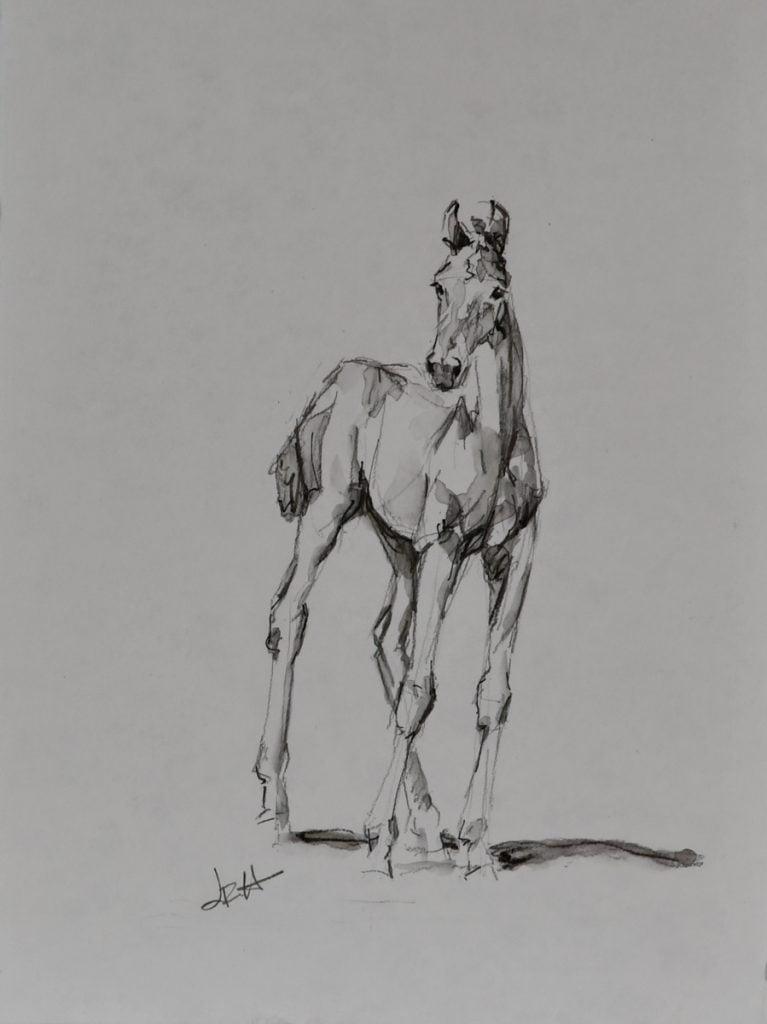 foal-sketch