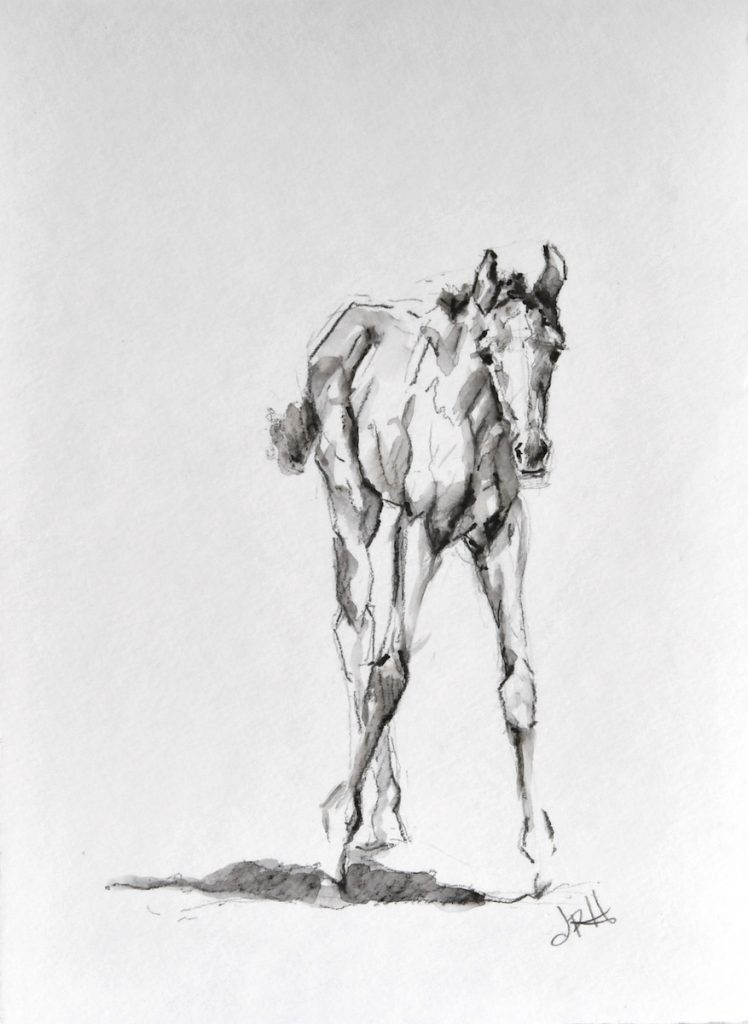 foal-sketch-watercolor