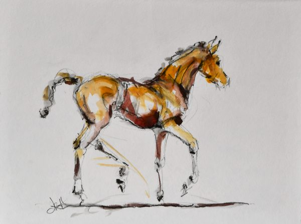 foal-sketch-watercolour