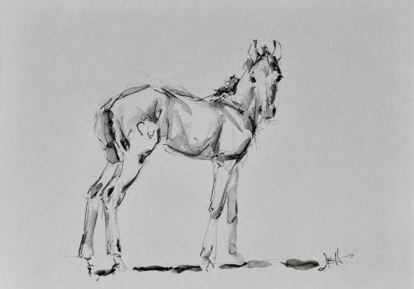 foal-sketch-horse
