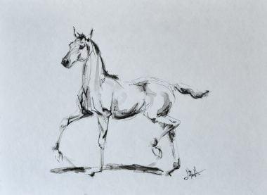 foal-sketch©jenniferprattartist.com
