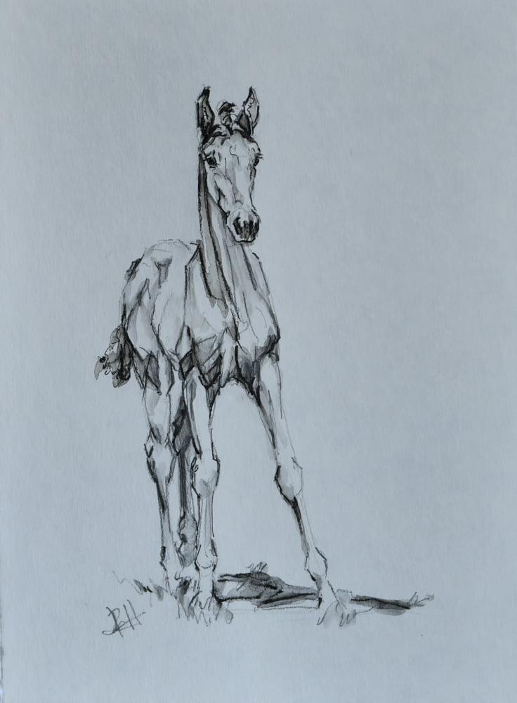 foal-sketch-14