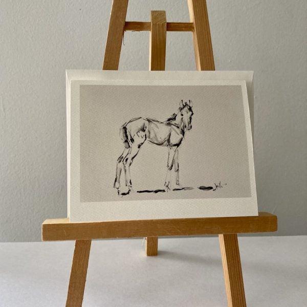 Foal Sketch - Notecards
