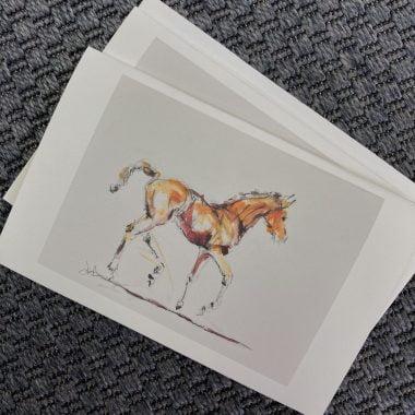 foal sketch notecards