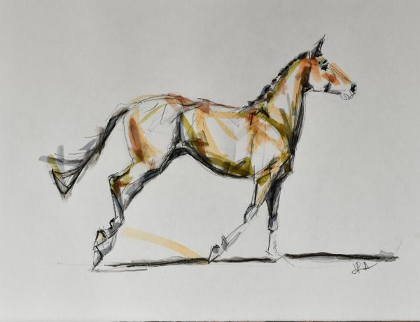 sketch-horse-equine-jenniferpratt
